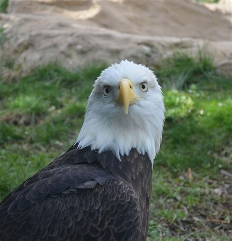 Eagles (The)