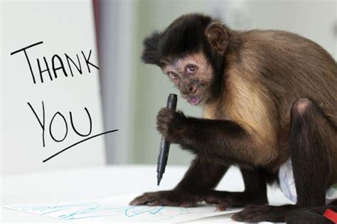 u monkeys